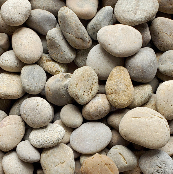 ****SAMPLE****        Mexican Beach Pebble, Buff,