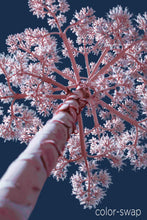 Austin photographer, infrared photography, century plant, blue and pink tree photo
