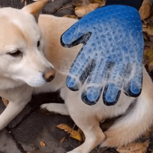 Magic Touch Deshedding Pet Grooming Glove
