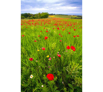 844-tuscany-poppies-field-italy-8441.jpg