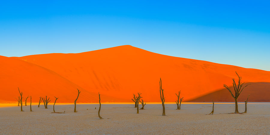 Dead Trees and Sand Dunes Pano, Deadvlei, Namibia