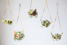 Leather Air Plant Hanger - Large - 5 Pack