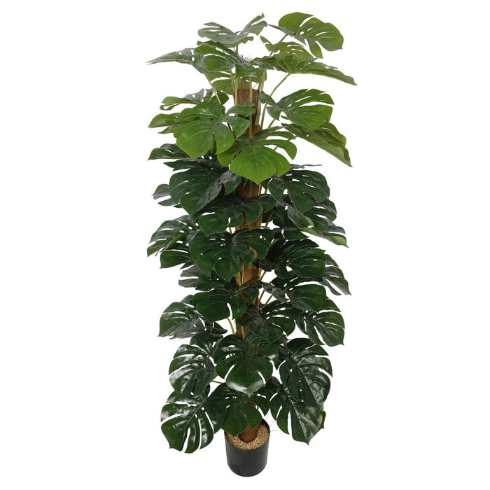 Artificial Money Plant (Monstera) with decorative pot 180cm