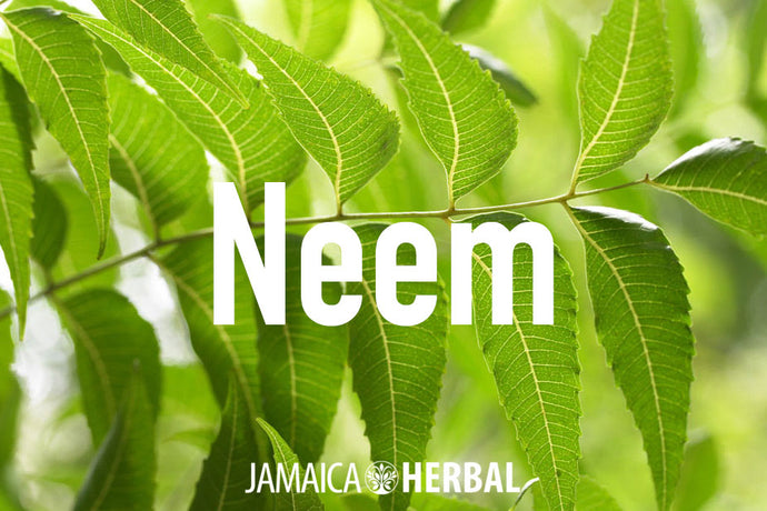 Neem Benefits | Healthy Skin, Lustrous Hair and so much more