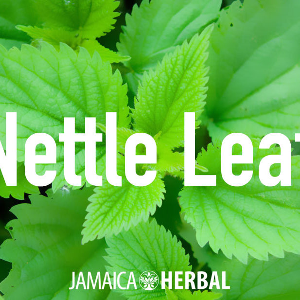 Benefits of Nettle Leaf | Shrink Prostate, Lower Blood Pressure, Anti-Inflammatory
