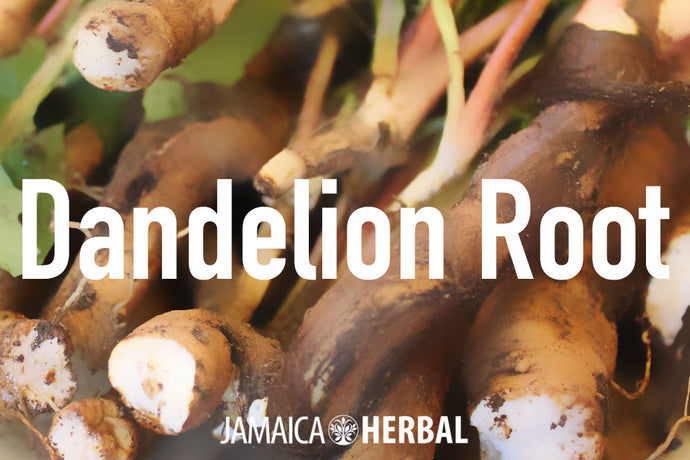 Dandelion Root Tea Benefits, Preparation, Consumption and Side Effects