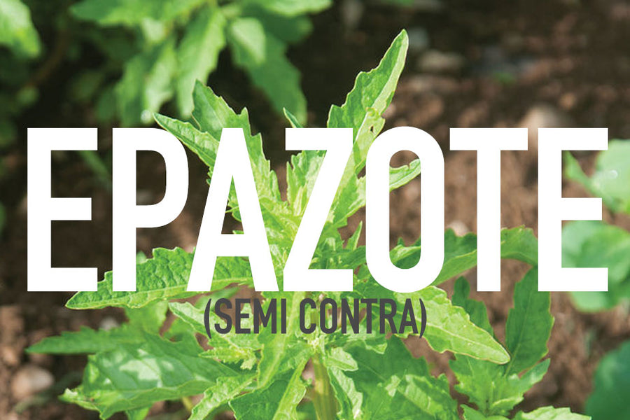 Using Epazote Leaf as an Intestinal Worm and Parasite Cleanse