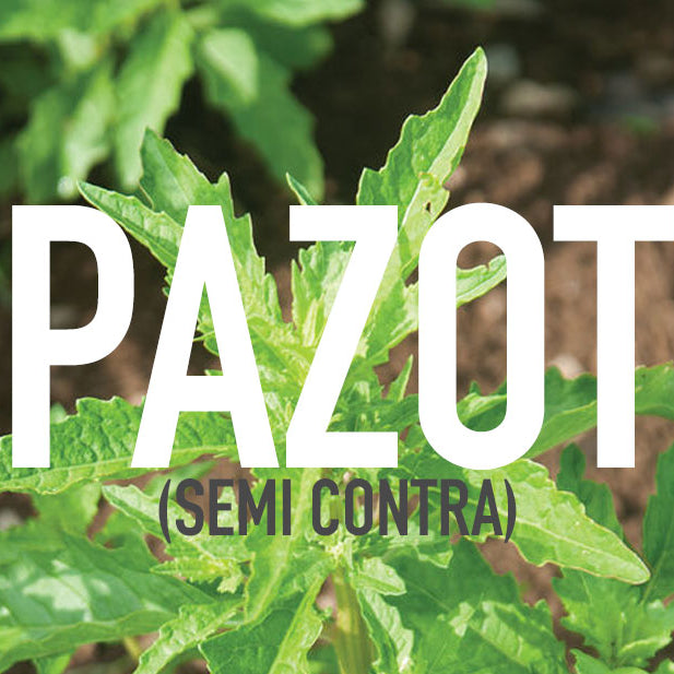 Epazote (Semi Contra) Herb Benefits