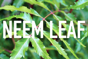 Neem leaf benefits and uses