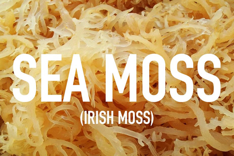 11 Sea Moss Benefits that will Change Your Life! — Jamaica Herbal