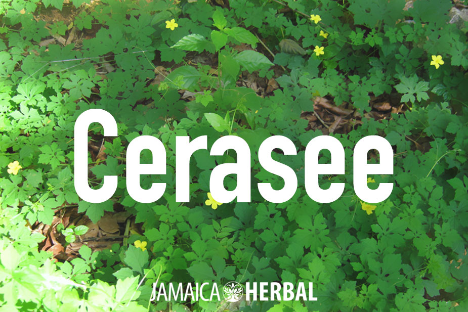 Cerasee Tea benefits | Everything you need to know