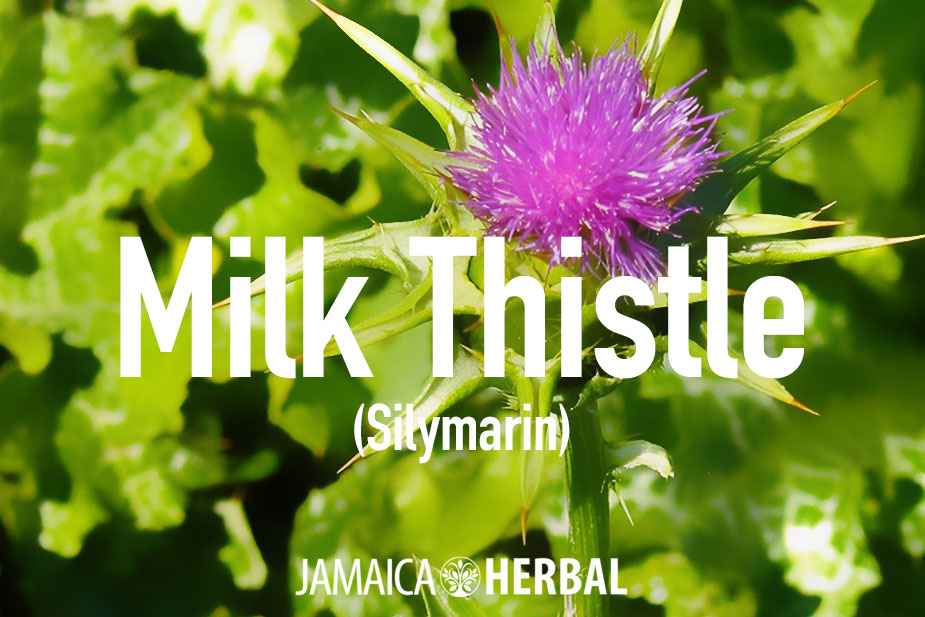 Milk thistle tea benefits