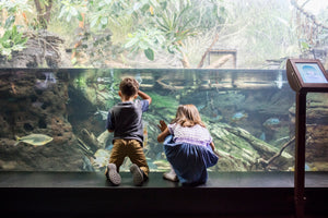 Sleep with the Fishes & More at the Shedd Aquarium