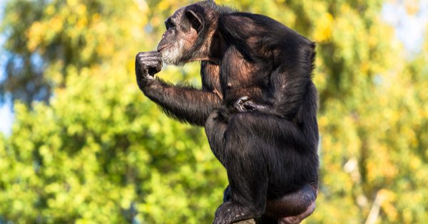 How Do We Better Understand the 'Monkey Mind'?