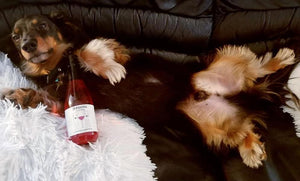 ZinfanTail Dog Wine