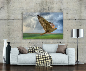 Plains Hawk and Cloud Photo, High Quality Metal Wall Art Print, Ready to Hang Home or Office Picture Decor,  Zen Decor, Free Shipping USA.