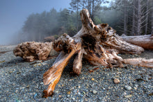 Northwest Ocean Beach Driftwood Metal Photography Print,  Ready to Hang Wall Art Decor for Home and Office, Zen Picture, Free Shipping USA
