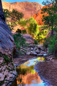 Desert Landscape Metal Print, Red Rock Canyon Oasis Photo, Large Zen Nature Picture for Home or Office Wall Art,  FREE SHIPPING in USA!