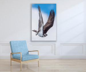 Wildlife Osprey Bird Photo, High Quality Metal Wall Art Print, Ready to Hang Home or Office Picture Decor, Free Shipping USA