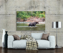 Canadian Grizzly Bear Nature Photo, High Quality Metal Wall Art Print, Ready to Hang Home or Office Picture Decor, Free Shipping USA