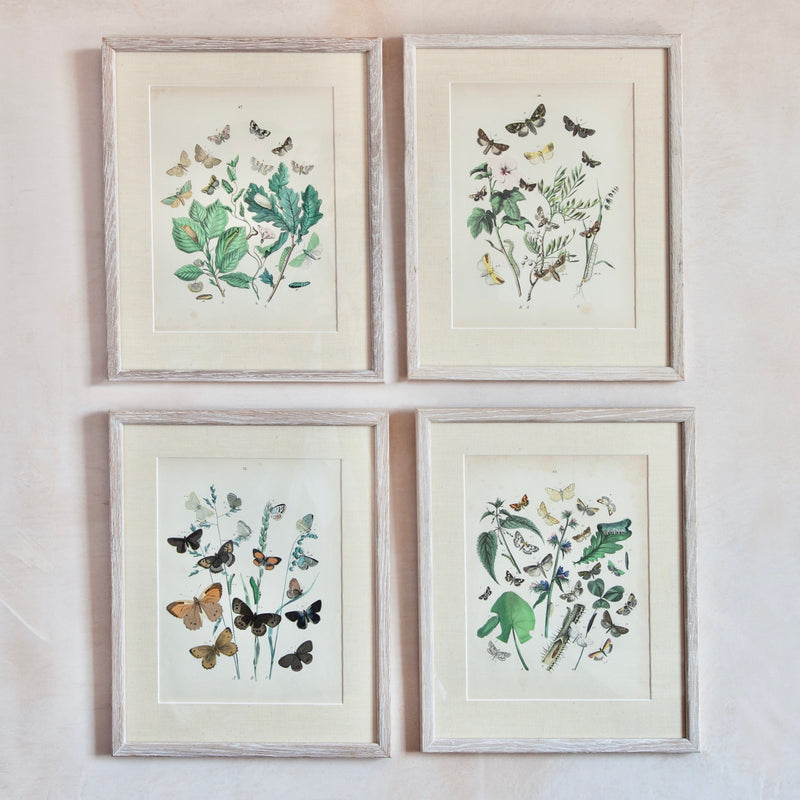 Set of 4, Custom Framed 19th Century Butterfly Prints
