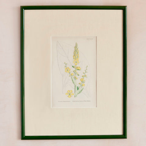 Custom Framed 19th Century Yellow Verbascum Print