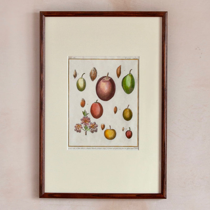 Framed 18/19th Century Hand-Coloured Fruit Print, Plums