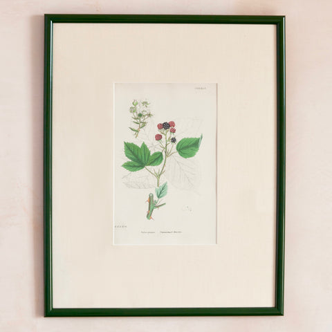 Custom Framed 19th Century Blackberry Print
