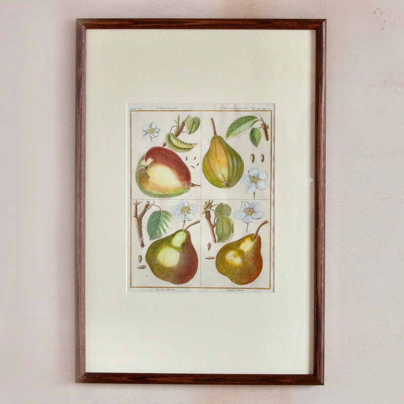 Framed 18/19th Century Hand-Coloured Fruit Print, Pears