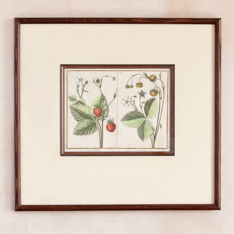 Custom-Framed 18th Century Fruit Print, Strawberries