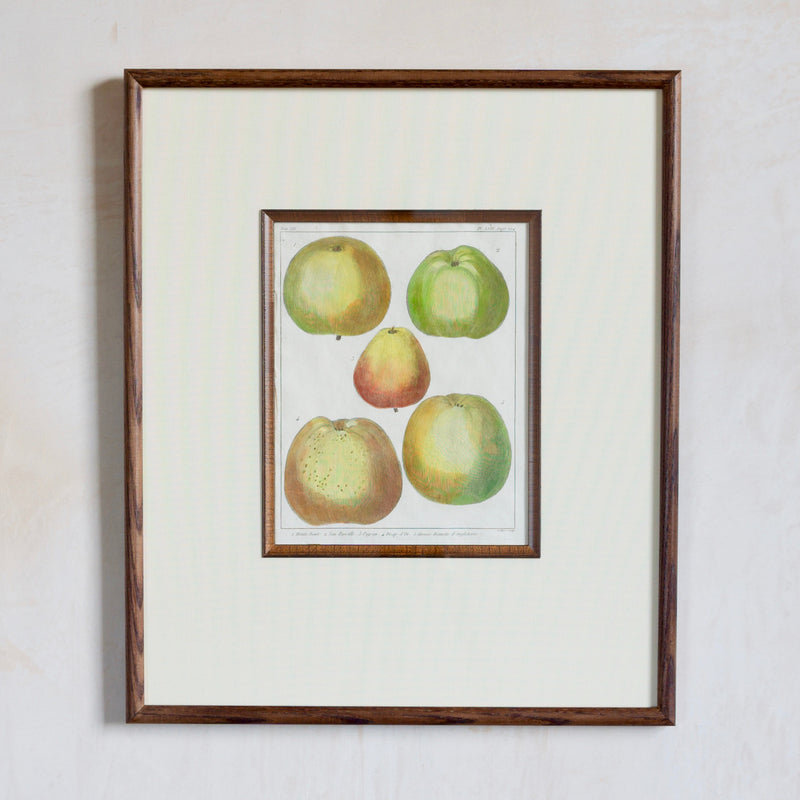 Framed 18/19th Century Hand-Coloured Fruit Print, Apples