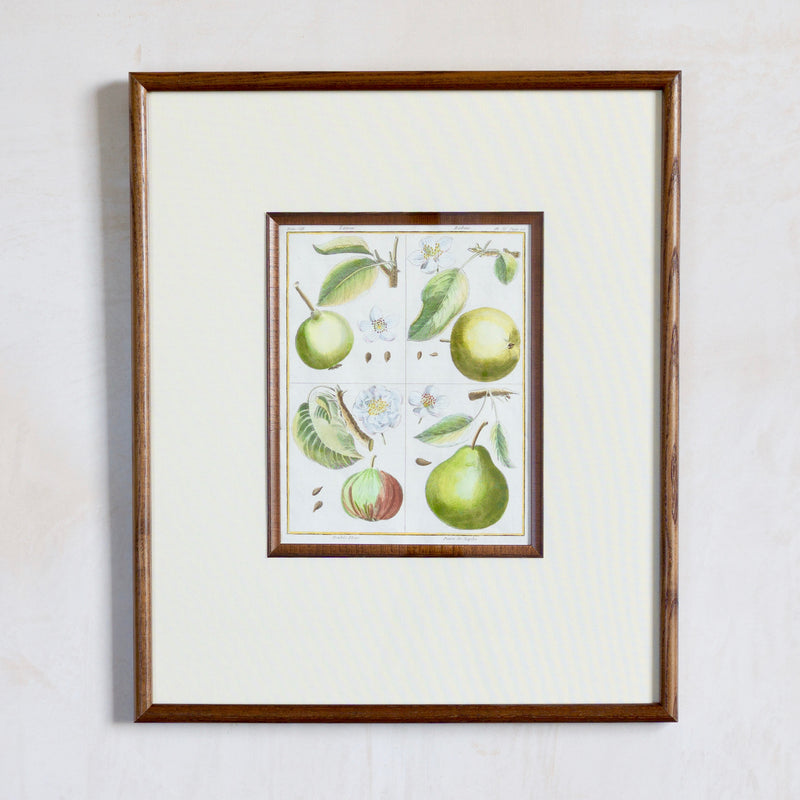 Framed 18/19th Century Hand-Coloured Botanical Print