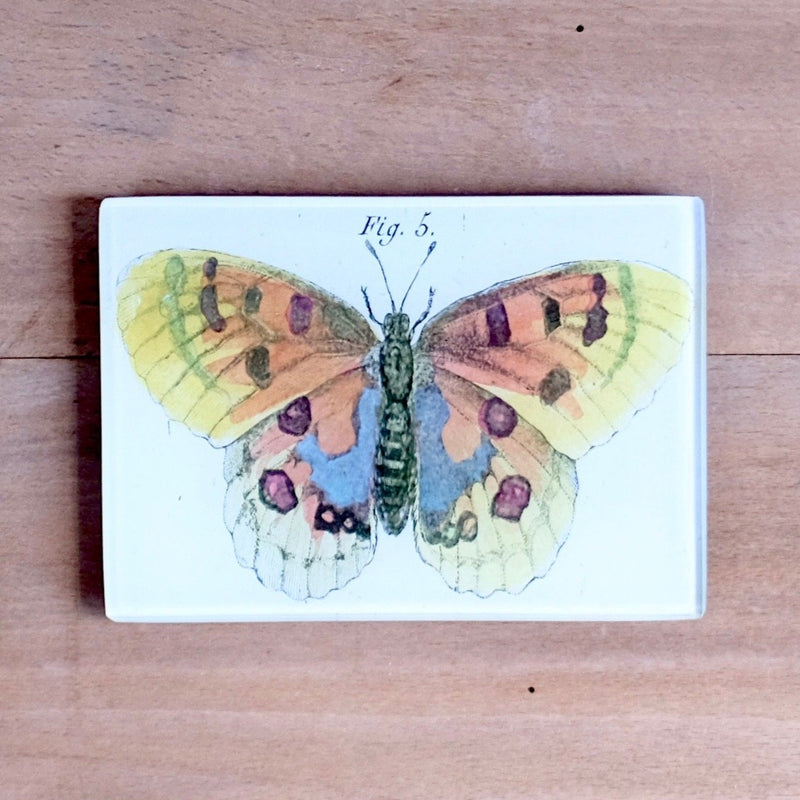 "Orange Butterfly, 3.5x5"" Rectangular Tray"