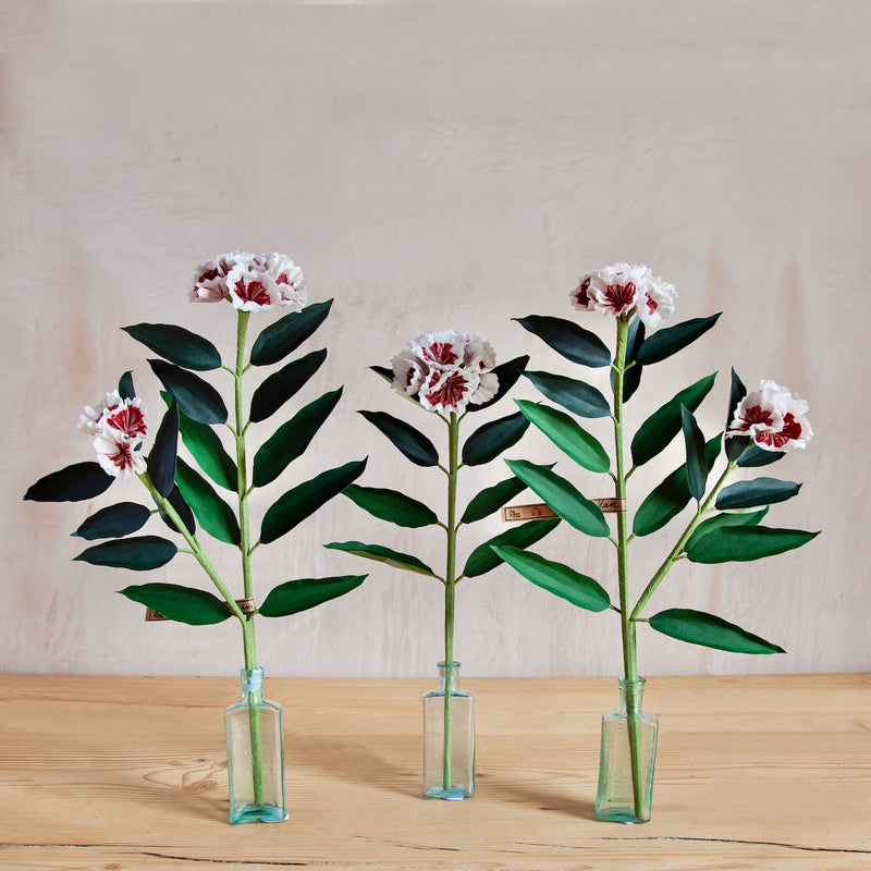 Sweet William Paper Flower Stems