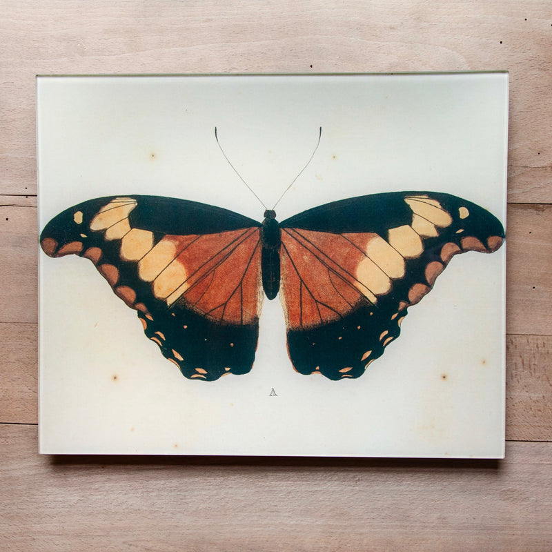 "Butterflies, 11x14"" Rectangular Tray"