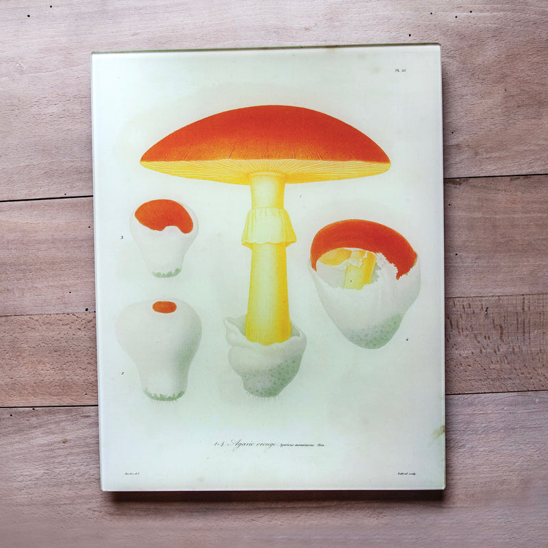 "Mushrooms, 11x14"" Rectangular Tray"