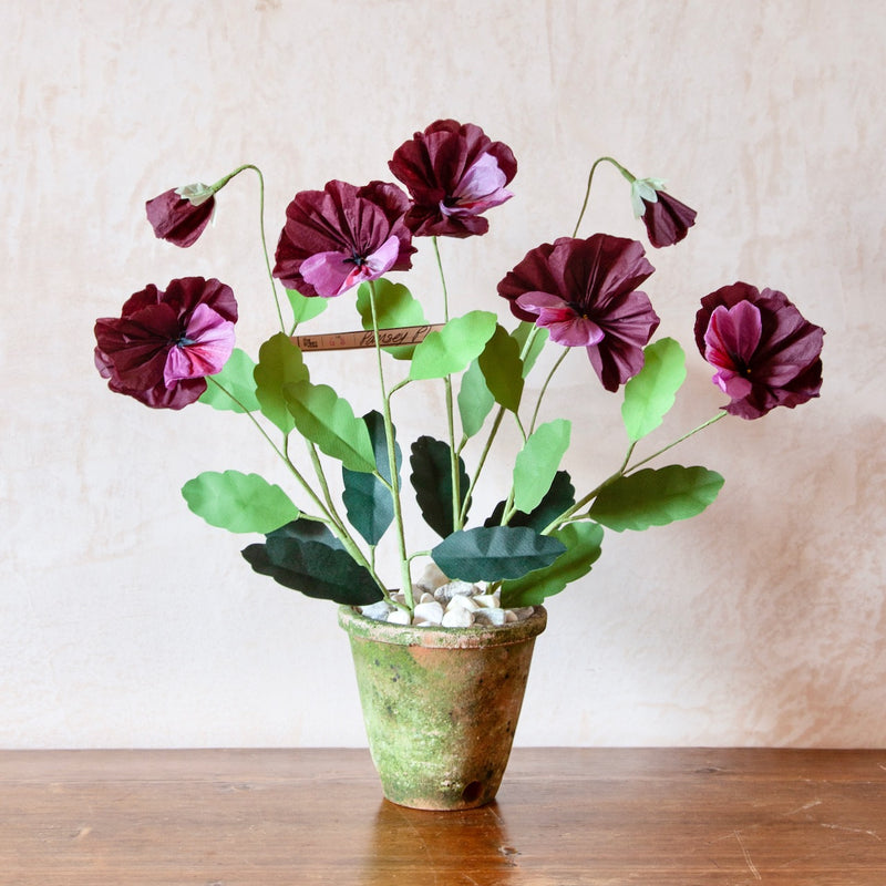 Pansy Paper Flower Plant
