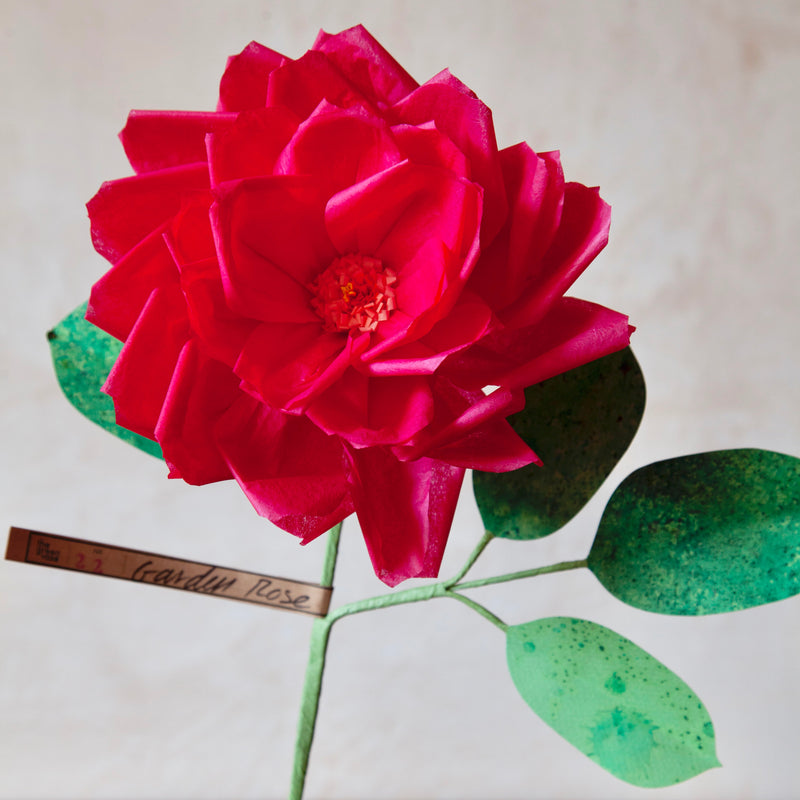 Garden Rose Paper Flower, Speckled Leaves