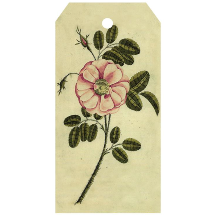 Painted Rose Gift Tag, Pack of 5