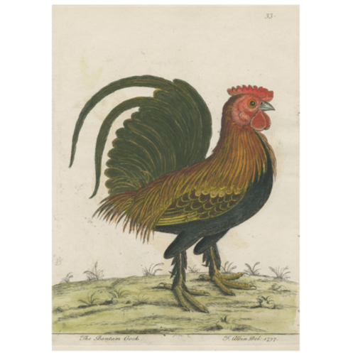 Bantam Cock Card with Envelope