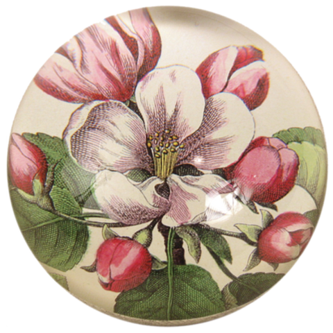 Beach Rose - Dome Paperweight