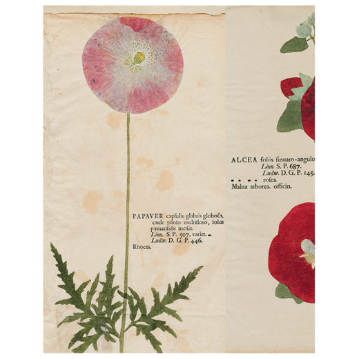 "Pink Poppy / Hollyhock / Iris (p.283) Book Page, 11 x 14"" Rectangular Tray"
