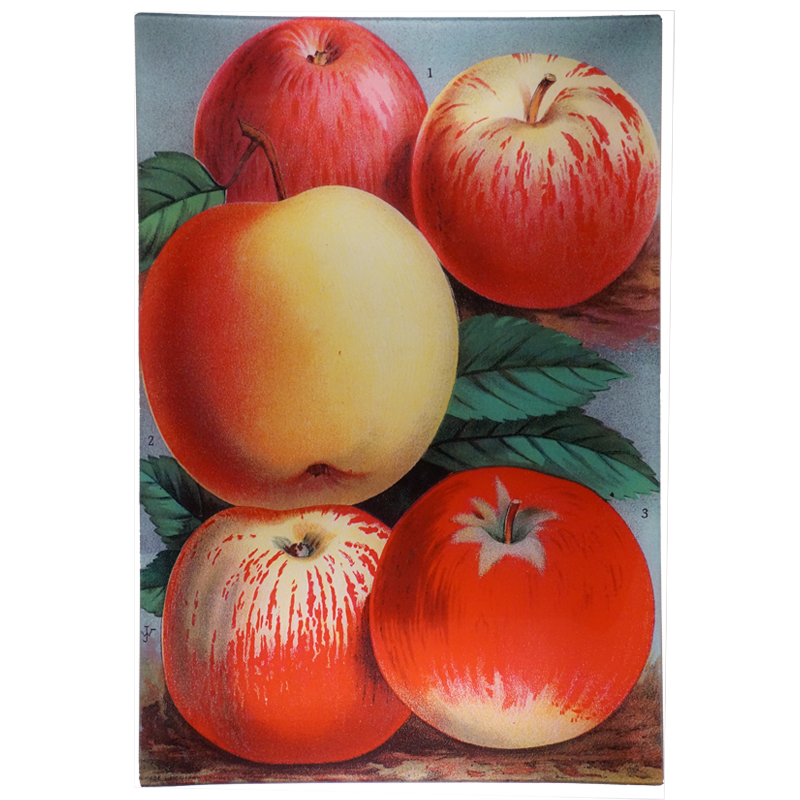 Apples Rectangular Tray, 15 x 22""