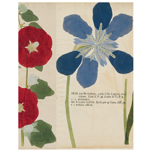 "Pink Poppy / Hollyhock / Iris (p.284) Book Page, 11 x 14"" Rectangular Tray"