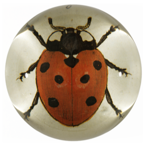 Red Ladybug, Dome Paperweight