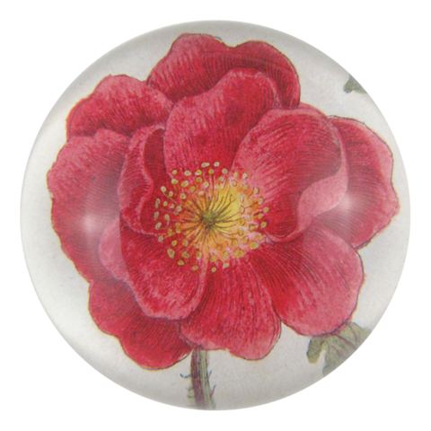 Rosa Rubra - Dome Paperweight