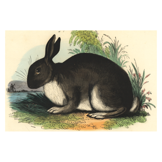 The Rabbit, Postcard