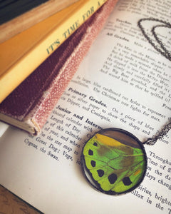 Green Birdwing Butterfly Wing Necklace