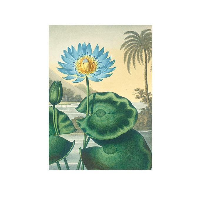 The Blue Egyptian Water Lily Greetings Card