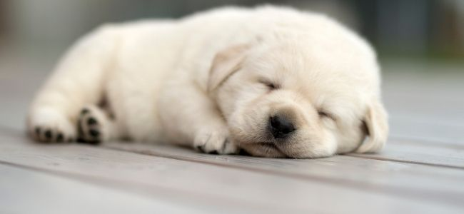 Five Cool Facts About The Way Animals Sleep